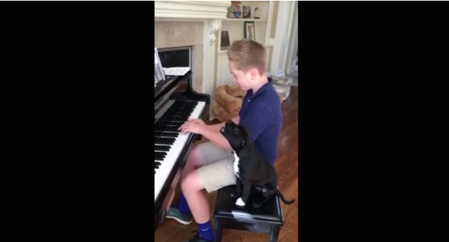Cuteness alert: Puppy accompanies teen's piano performance
